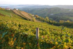 Weinberge des Piemonts, soweit das Auge reicht.